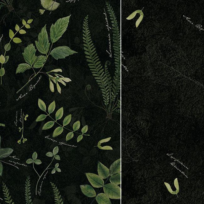 Kolelcija Herbarium