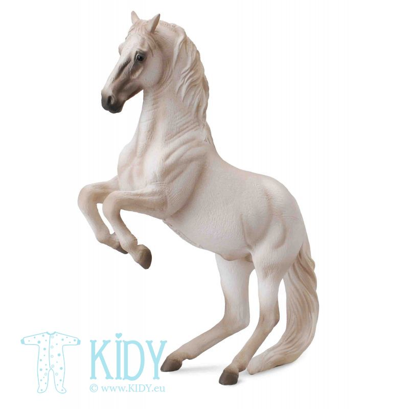 Žirgas lipizanerio veislės