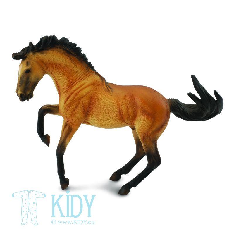 Žirgas lusitano veislės rudas
